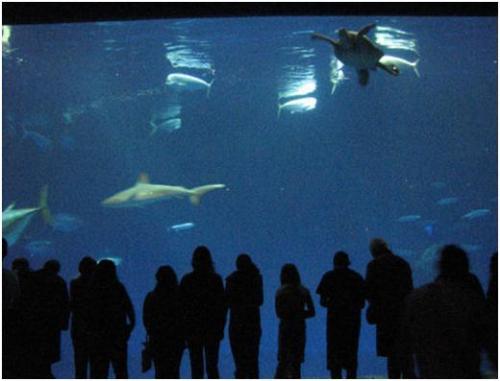 Monterey Bay Aquarium Field Trip Pacificrim Exchange